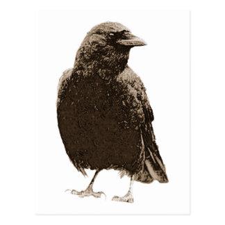 Hübsche Krähe Postkarte