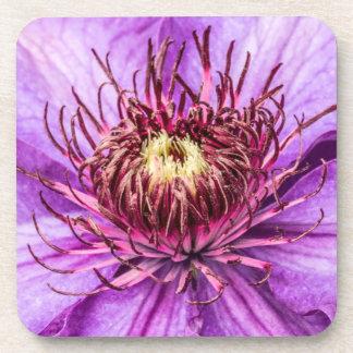 Hübsche lila Clematis-Blume Getränkeuntersetzer