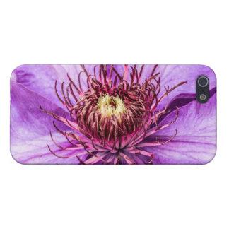 Hübsche lila Clematis-Blume iPhone 5 Cover