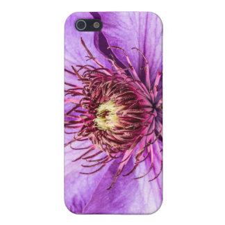 Hübsche lila Clematis-Blume iPhone 5 Schutzhülle