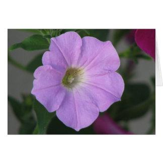 Hübsche lila Petunie Karte