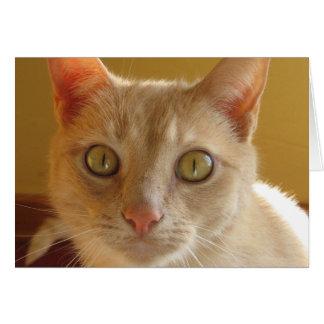 Hübsche orange Katze Karte