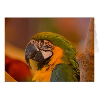 Hübsche Papageien-Anmerkungs-Karte Karte