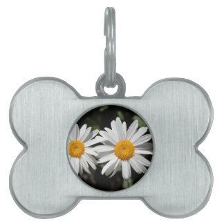 Hübsche reine Blumen des weißen Gänseblümchens Tiermarke