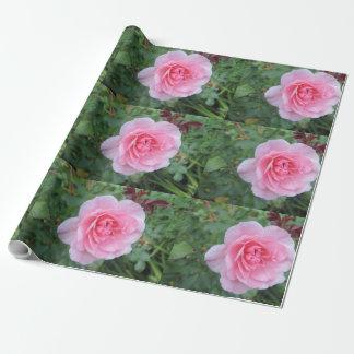 Hübsche rosa blühende Rose Geschenkpapier
