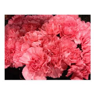 Hübsche rosa Gartennelken-Blumen Postkarte