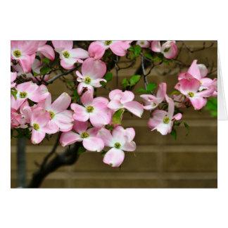 Hübsche rosa Hartriegel-Blumen Karte