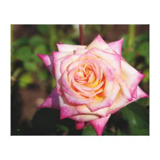 Hübsche rosa Rose Leinwanddruck