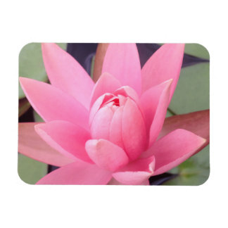 Hübsche rosa Wasser-Lilie mit Blumen Magnet