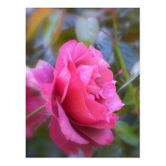 Hübsche Rose Postkarte