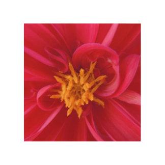 Hübsche rote Dahlie - Holzdruck