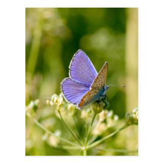 Hübsche Schmetterlings-Postkarte Postkarte
