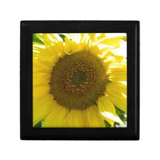 Hübsche Sonnenblume Erinnerungskiste