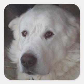 Hübscher große Pyrenäen-Hund Quadratischer Aufkleber