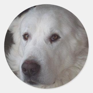 Hübscher große Pyrenäen-Hund Runder Aufkleber