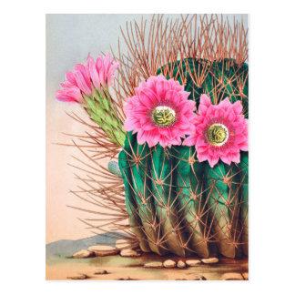 hübscher Kaktus Postkarte