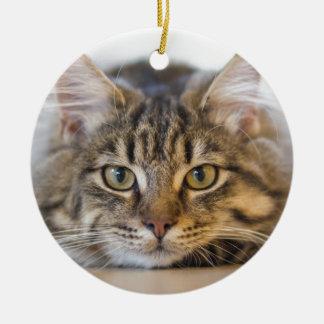 Hübscher Kitty, der Sie betrachtet Rundes Keramik Ornament