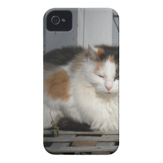 Hübscher Kitty iPhone 4 Cover
