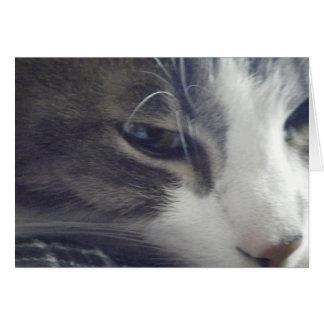 Hübscher Kitty Karte