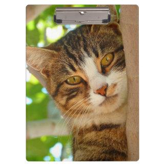 Hübscher Kitty-Katzen-Baum Klemmbrett