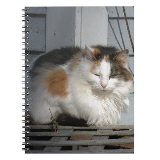 Hübscher Kitty Notizblock