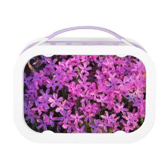 Hübscher lila Blumen-Mittagessen-Kasten Brotdose