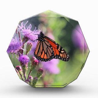 Hübscher Monarch Auszeichnung