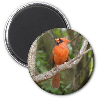 Hübscher NordKardinals-Vogel-Magnet Runder Magnet 5,7 Cm