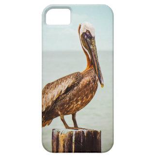 Hübscher Pelikan gehockt über dem Ozean iPhone 5 Etui
