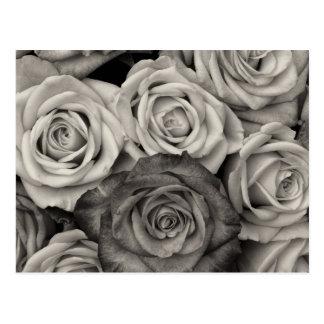 Hübscher Schwarzweiss-Rosen-Blumenstrauß der Postkarte