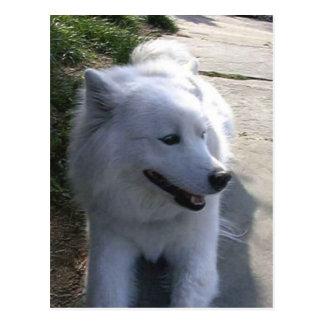 Hübscher süßer weißer Samoyed-Hund Postkarte