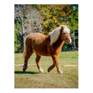 Hübsches die Shetlandinseln-Pony Postkarte