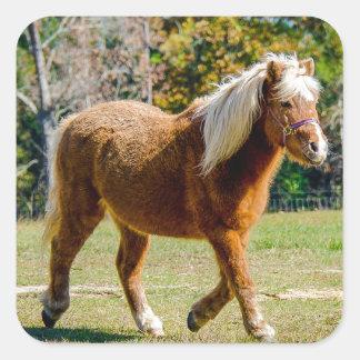 Hübsches die Shetlandinseln-Pony Quadratischer Aufkleber
