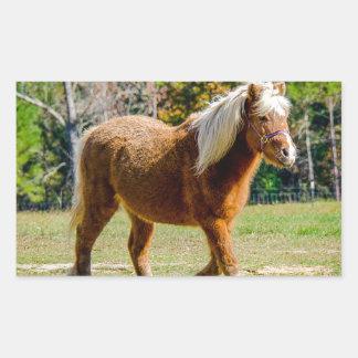 Hübsches die Shetlandinseln-Pony Rechteckiger Aufkleber