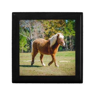 Hübsches die Shetlandinseln-Pony Schmuckschachtel