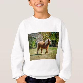Hübsches die Shetlandinseln-Pony Sweatshirt