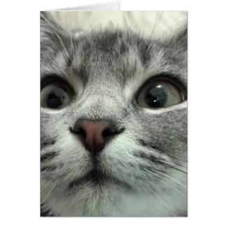 Hübsches Kätzchen, Gute Besserung Mitteilungskarte