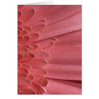 Hübsches korallenrotes rosa Gerbera-Gänseblümchen Karte