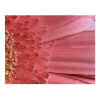 Hübsches korallenrotes rosa Gerbera-Gänseblümchen Postkarte