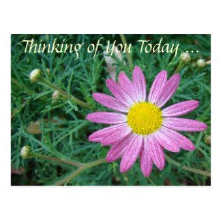 Hübsches rosa Gänseblümchen Postkarte
