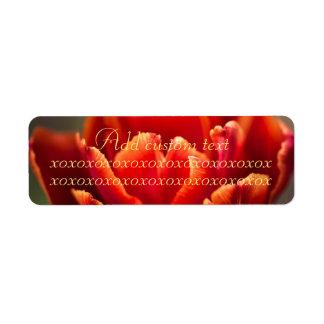 Hübsches rotes Tulpe-Blumenblatt-Foto. Addieren