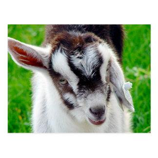 Hübsches Ziegen-Kind Postkarten