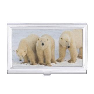 Hudson Bay Kanadas. Eisbärmutter mit zwei Visitenkarten Etui