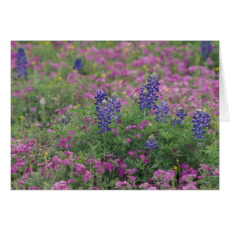 Hügel-Land USA, Texas. Bluebonnets unter Phlox Karte