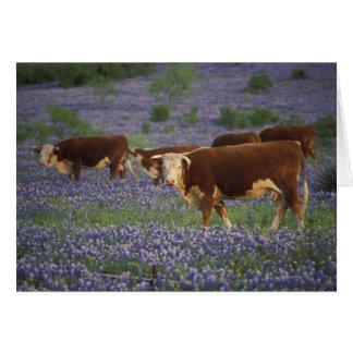Hügel-Land USA, Texas, Texas, Hereford Karte