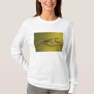 Hügel Michigans, Rochester. Betender Mantis an T-Shirt