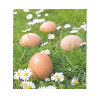 Huhn eggs im Frühjahr Gras mit Gänseblümchen Notizblock