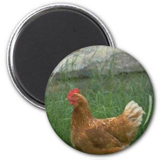 Huhn Kühlschrankmagnet