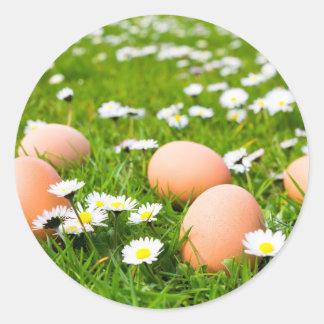 Huhneier im Gras mit Gänseblümchen Runder Aufkleber