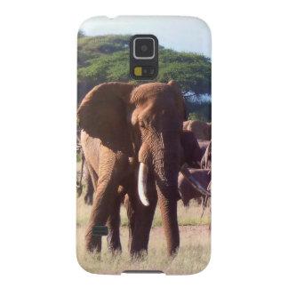 Hülle Elefant